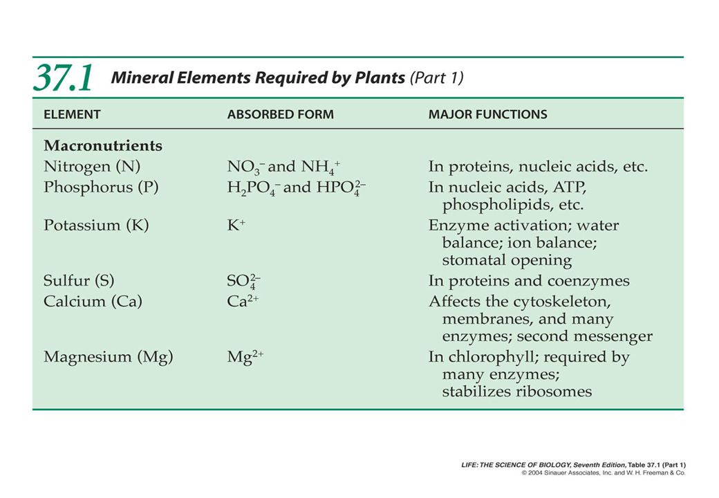 Conditions required for Nutrient Uptake by plants Root hairs are the most active points of nutrient uptake.