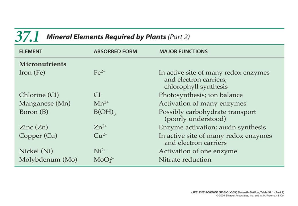 PENYERAPAN HARA Lalulintas ion memasuki akar Mineral nutrients absorbed from the root has to be carried to the xylem.