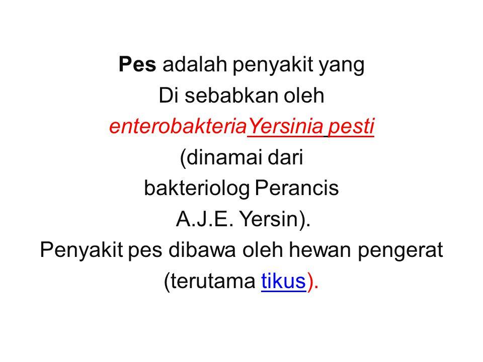Pes adalah penyakit yang Di sebabkan oleh enterobakteriaYersinia pesti (dinamai dari bakteriolog Perancis A.J.E.