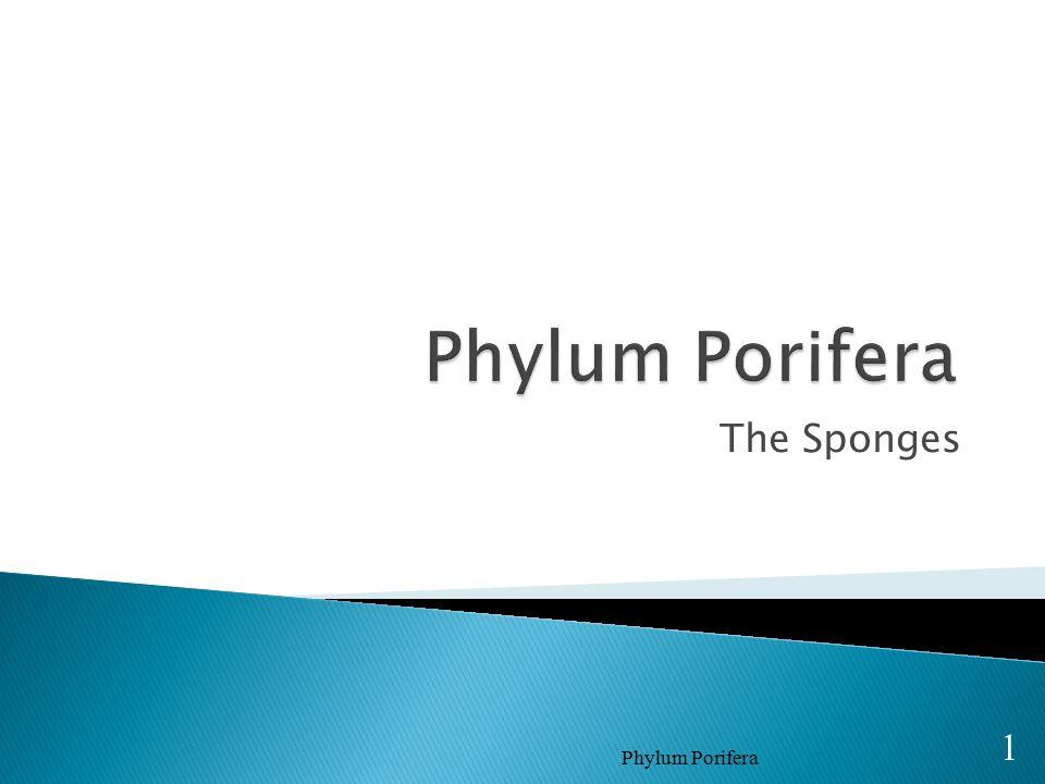 The Sponges Phylum Porifera 1