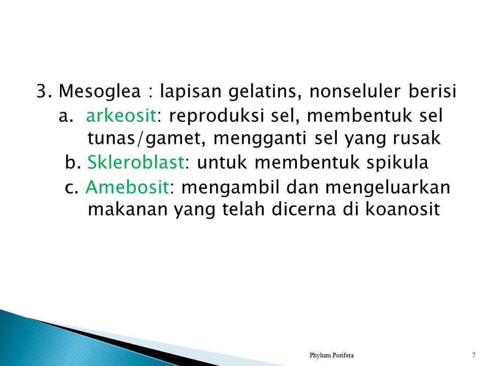 3. Mesoglea : lapisan gelatins, nonseluler berisi a. arkeosit: reproduksi sel, membentuk sel tunas/gamet, mengganti sel yang rusak b. Skleroblast: unt