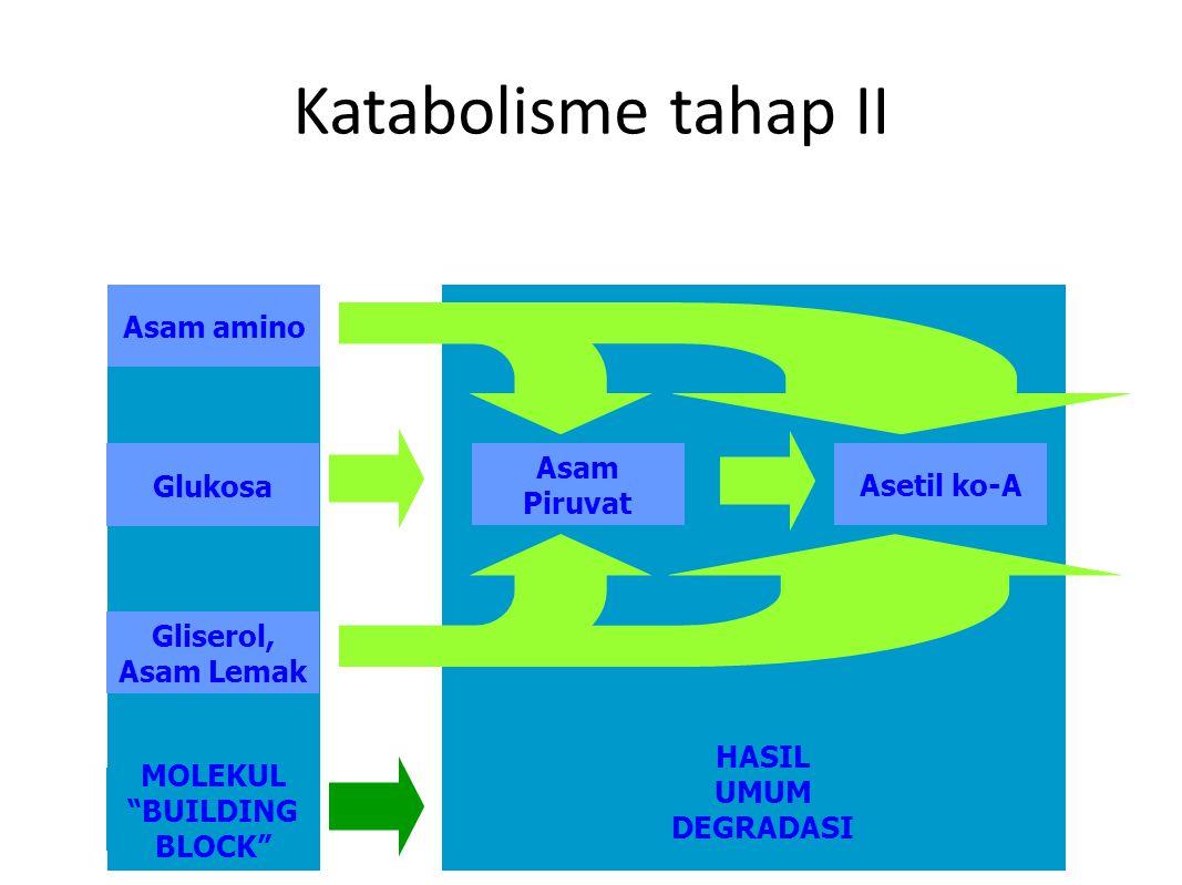 HASIL UMUM DEGRADASI MOLEKUL BUILDING BLOCK Katabolisme tahap II Asam amino Glukosa Gliserol, Asam Lemak Asam Piruvat Asetil ko-A