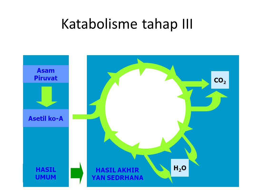 HASIL AKHIR YAN SEDRHANA HASIL UMUM Katabolisme tahap III Asam Piruvat Asetil ko-A CO 2 H2OH2O