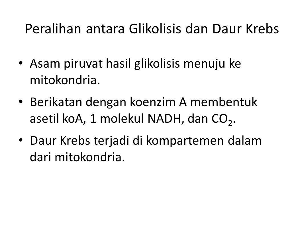 Peralihan antara Glikolisis dan Daur Krebs Asam piruvat hasil glikolisis menuju ke mitokondria.