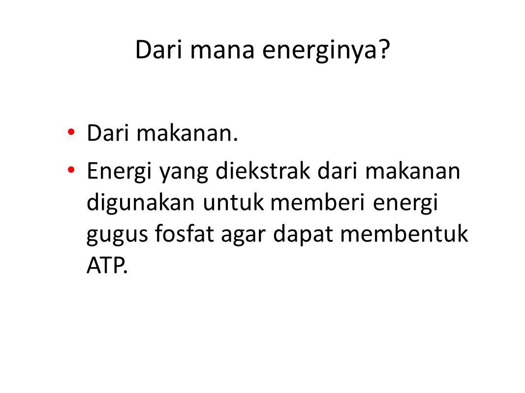 Dari mana energinya.Dari makanan.