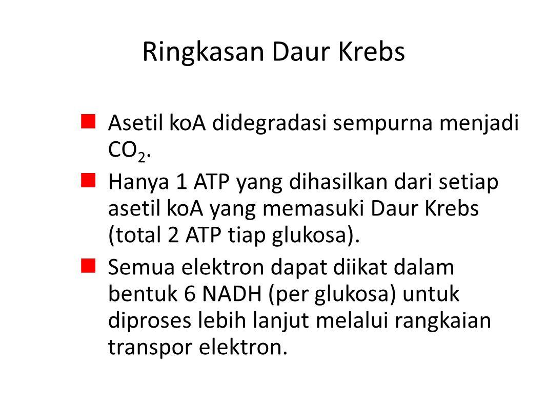 Ringkasan Daur Krebs Asetil koA didegradasi sempurna menjadi CO 2.
