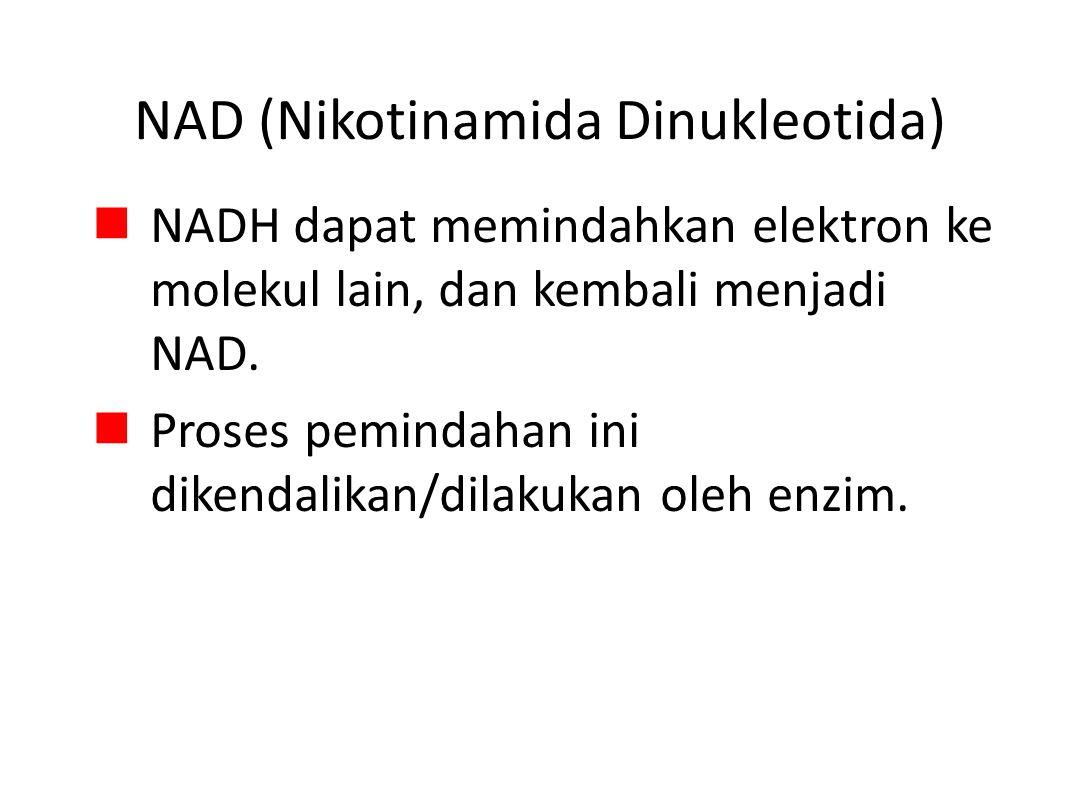 NAD (Nikotinamida Dinukleotida) NADH dapat memindahkan elektron ke molekul lain, dan kembali menjadi NAD.