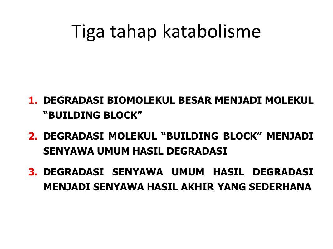 Tiga tahap katabolisme 1.DEGRADASI BIOMOLEKUL BESAR MENJADI MOLEKUL BUILDING BLOCK 2.DEGRADASI MOLEKUL BUILDING BLOCK MENJADI SENYAWA UMUM HASIL DEGRADASI 3.DEGRADASI SENYAWA UMUM HASIL DEGRADASI MENJADI SENYAWA HASIL AKHIR YANG SEDERHANA