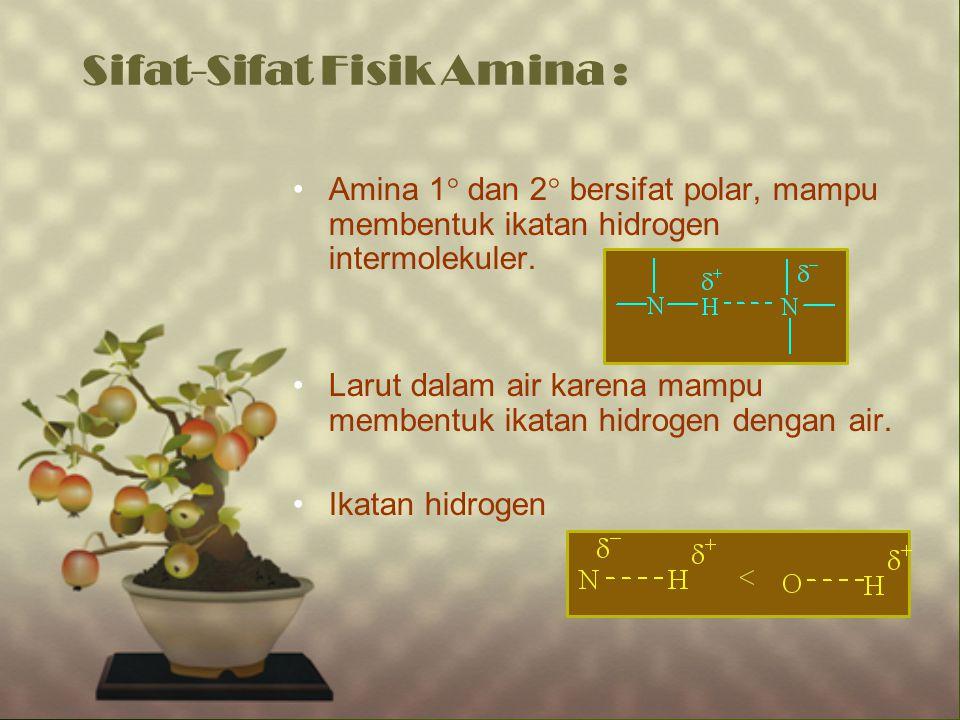 Sifat-Sifat Fisik Amina : Amina 1  dan 2  bersifat polar, mampu membentuk ikatan hidrogen intermolekuler. Larut dalam air karena mampu membentuk ika