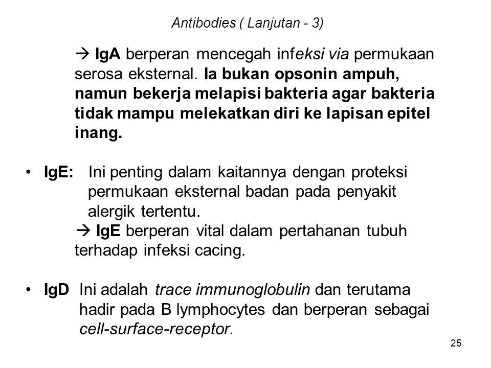 25 Antibodies ( Lanjutan - 3)  IgA berperan mencegah infeksi via permukaan serosa eksternal. Ia bukan opsonin ampuh, namun bekerja melapisi bakteria