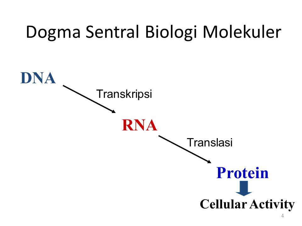Dogma Sentral Biologi Molekuler 4 DNA RNA Protein Transkripsi Translasi Cellular Activity