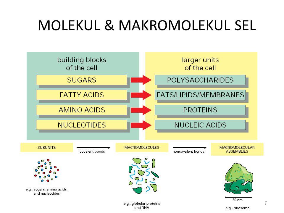 MOLEKUL & MAKROMOLEKUL SEL 7
