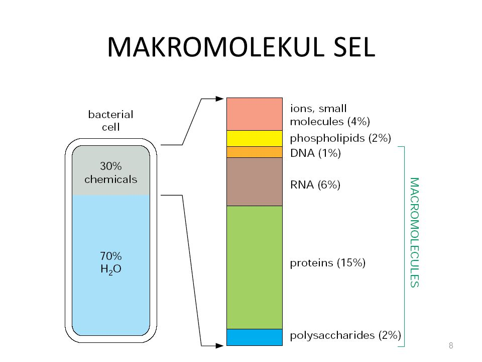 MAKROMOLEKUL SEL 8