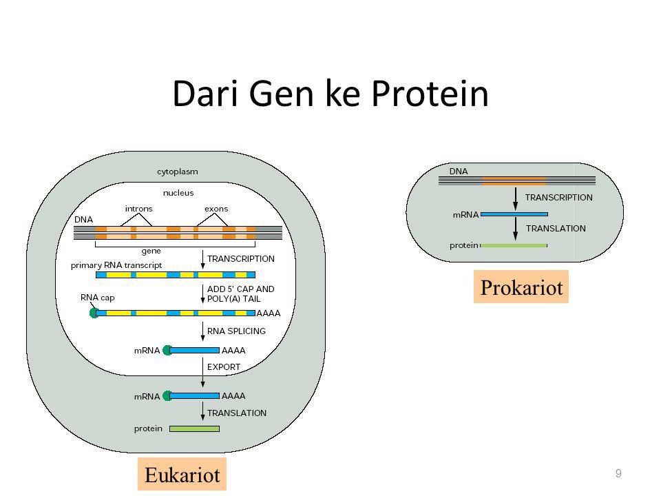 Dari Gen ke Protein 9 Eukariot Prokariot