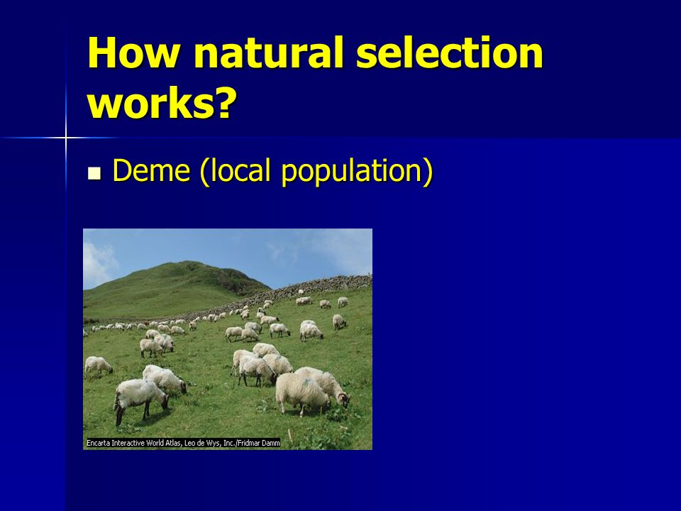 How natural selection works Deme (local population) Deme (local population)