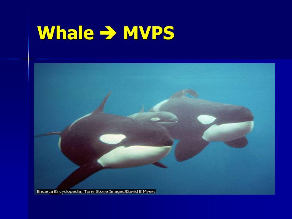 Whale  MVPS