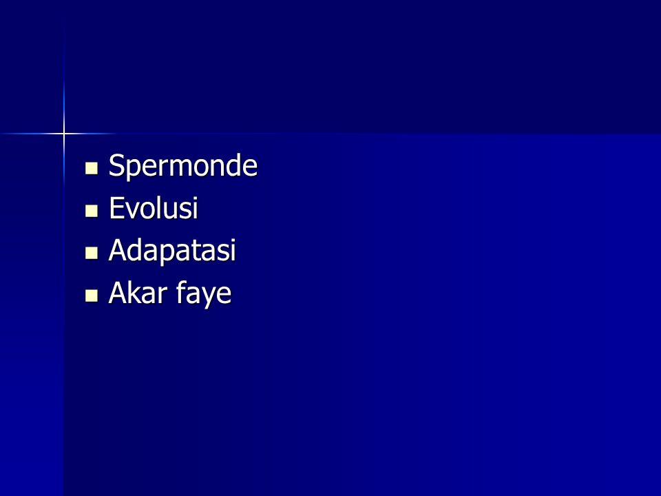 Spermonde Spermonde Evolusi Evolusi Adapatasi Adapatasi Akar faye Akar faye