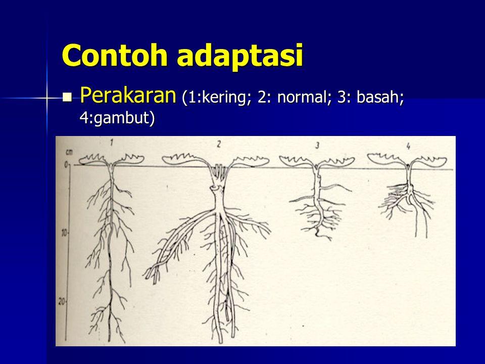 Contoh adaptasi Kakao dan Gamal di Sulawesi Kakao dan Gamal di Sulawesi Hasil Penelitian (Prihastani, Soepandi, Tjitrosemito, I.