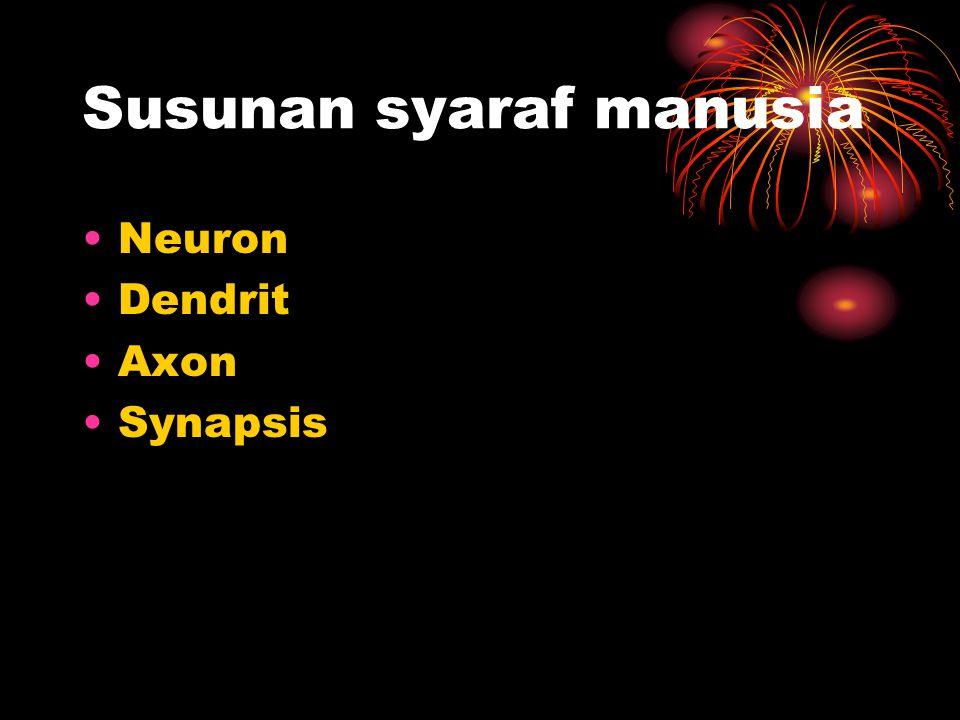 Susunan syaraf manusia Neuron Dendrit Axon Synapsis