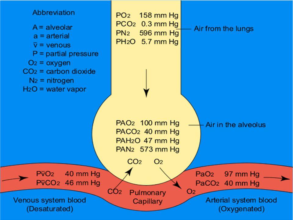 Keseimbangan Asam Basa CO 2 + H 2 O  H 2 CO 3  H + + HCO 3 - Asidosis : Hipoventilasi, Retensi CO 2 Alkalosis : Hiperventilasi, Ekskresi CO 2