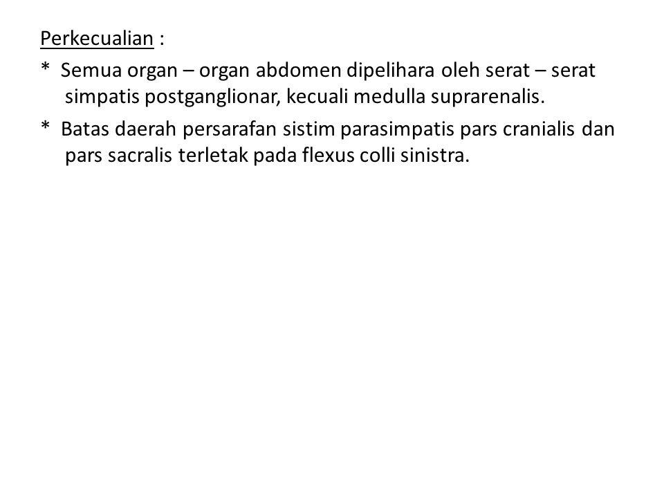 Perkecualian : * Semua organ – organ abdomen dipelihara oleh serat – serat simpatis postganglionar, kecuali medulla suprarenalis. * Batas daerah persa