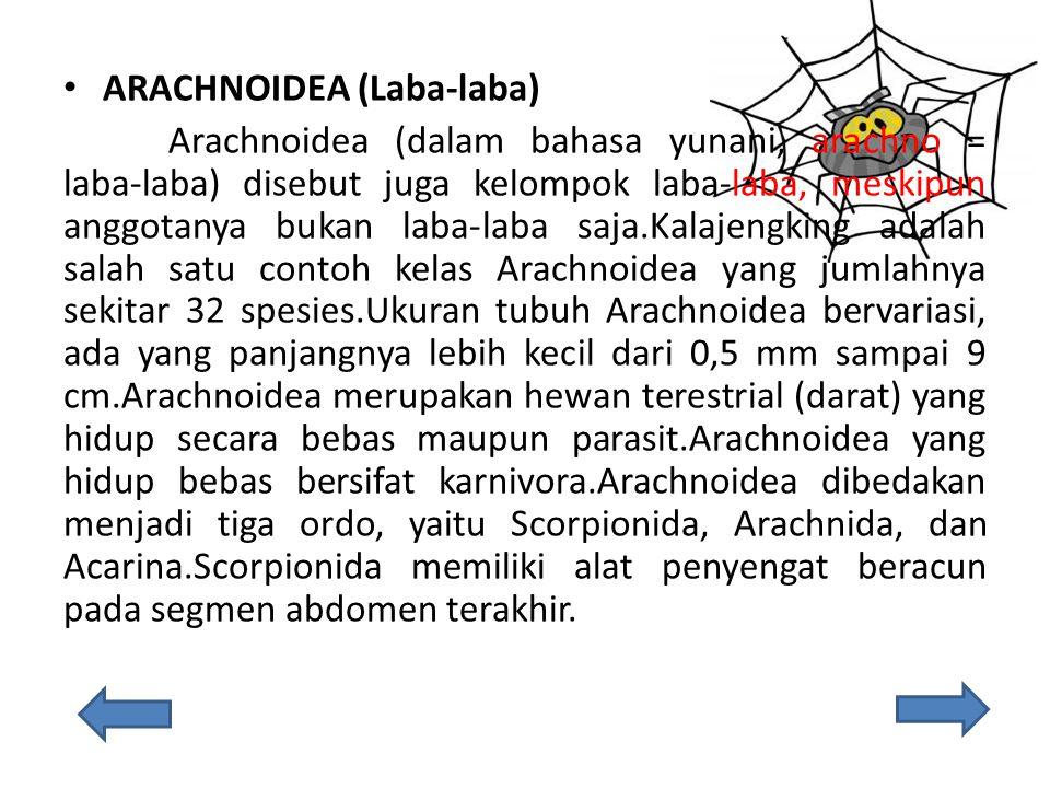 ARACHNOIDEA (Laba-laba) Arachnoidea (dalam bahasa yunani, arachno = laba-laba) disebut juga kelompok laba-laba, meskipun anggotanya bukan laba-laba saja.Kalajengking adalah salah satu contoh kelas Arachnoidea yang jumlahnya sekitar 32 spesies.Ukuran tubuh Arachnoidea bervariasi, ada yang panjangnya lebih kecil dari 0,5 mm sampai 9 cm.Arachnoidea merupakan hewan terestrial (darat) yang hidup secara bebas maupun parasit.Arachnoidea yang hidup bebas bersifat karnivora.Arachnoidea dibedakan menjadi tiga ordo, yaitu Scorpionida, Arachnida, dan Acarina.Scorpionida memiliki alat penyengat beracun pada segmen abdomen terakhir.