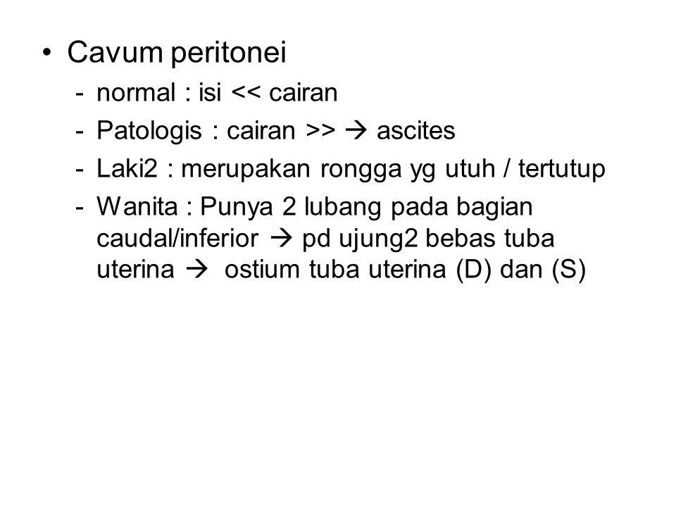 Cavum peritonei -normal : isi << cairan -Patologis : cairan >>  ascites -Laki2 : merupakan rongga yg utuh / tertutup -Wanita : Punya 2 lubang pada ba