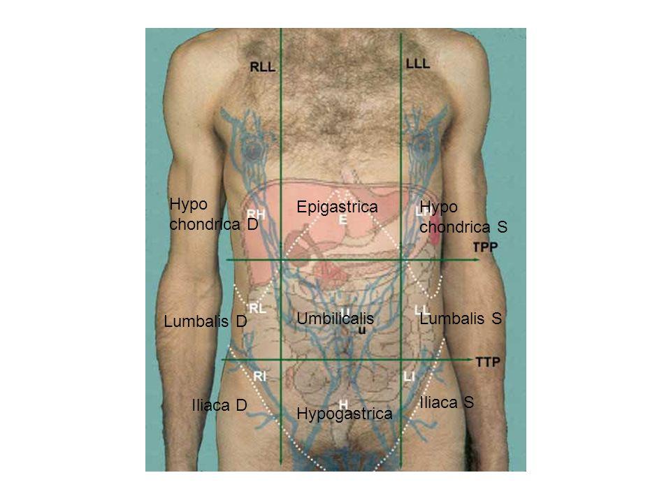 Hypo chondrica D EpigastricaHypo chondrica S Lumbalis D UmbilicalisLumbalis S Iliaca D Hypogastrica Iliaca S