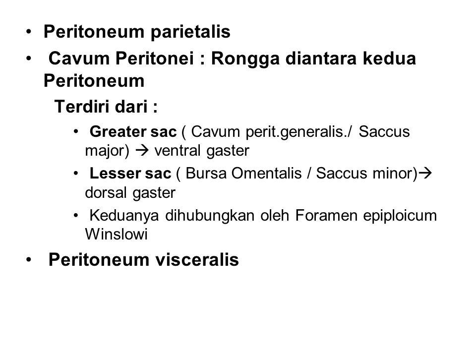 Peritoneum parietalis Cavum Peritonei : Rongga diantara kedua Peritoneum Terdiri dari : Greater sac ( Cavum perit.generalis./ Saccus major)  ventral