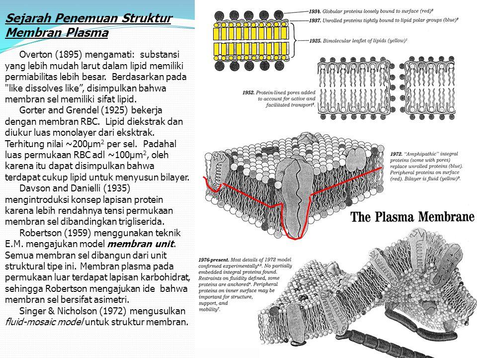 13 Sejarah Penemuan Struktur Membran Plasma Overton (1895) mengamati: substansi yang lebih mudah larut dalam lipid memiliki permiabilitas lebih besar.