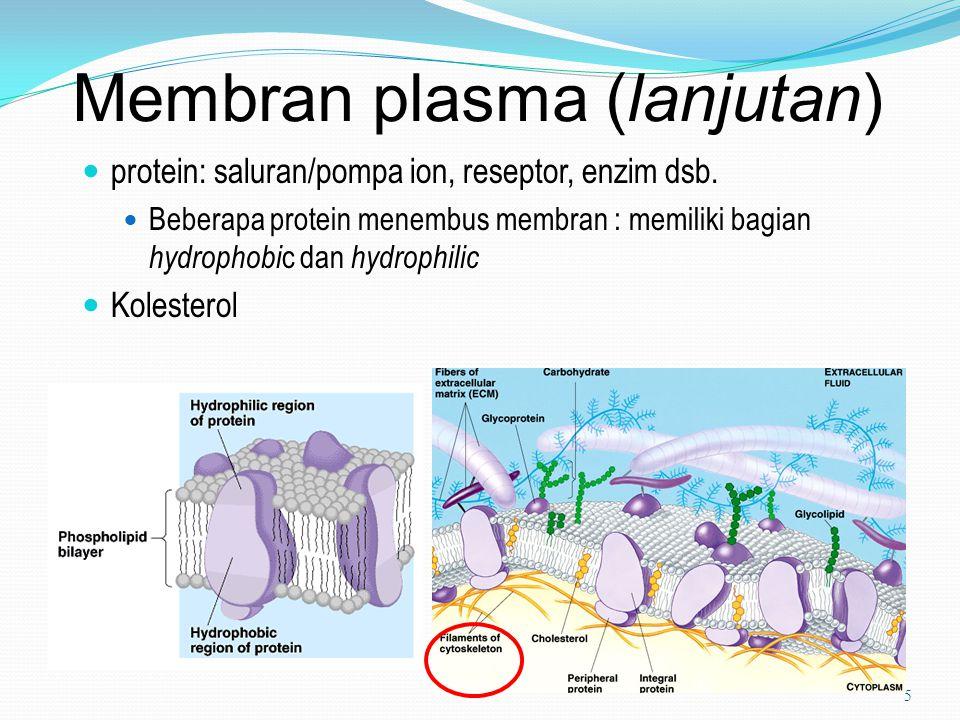 Membran plasma (lanjutan) protein: saluran/pompa ion, reseptor, enzim dsb. Beberapa protein menembus membran : memiliki bagian hydrophobi c dan hydrop
