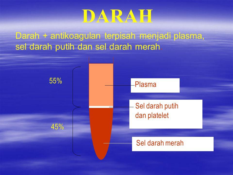 PLASMA & SEL DARAH Darah ikan Tinca tinca L.