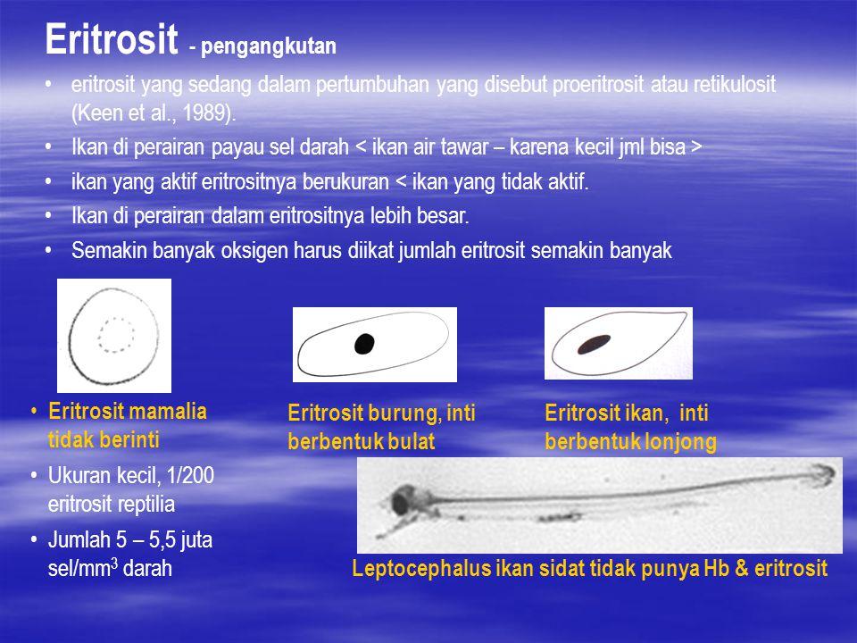 Eritrosit - pengangkutan eritrosit yang sedang dalam pertumbuhan yang disebut proeritrosit atau retikulosit (Keen et al., 1989). Ikan di perairan paya