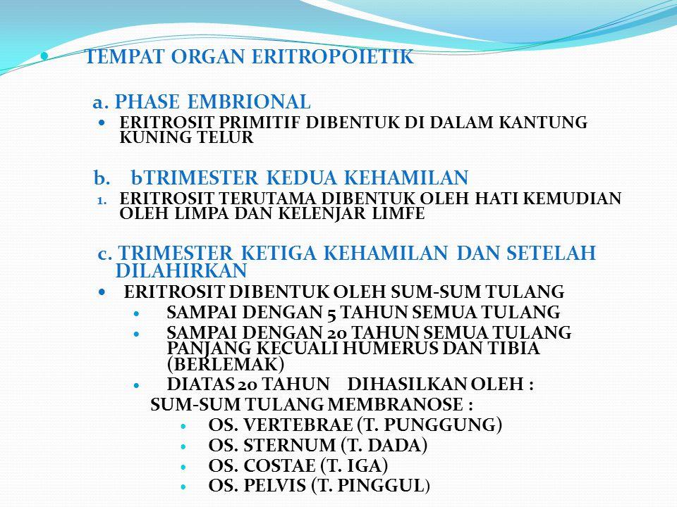 TEMPAT ORGAN ERITROPOIETIK a. PHASE EMBRIONAL ERITROSIT PRIMITIF DIBENTUK DI DALAM KANTUNG KUNING TELUR b. bTRIMESTER KEDUA KEHAMILAN 1. ERITROSIT TER