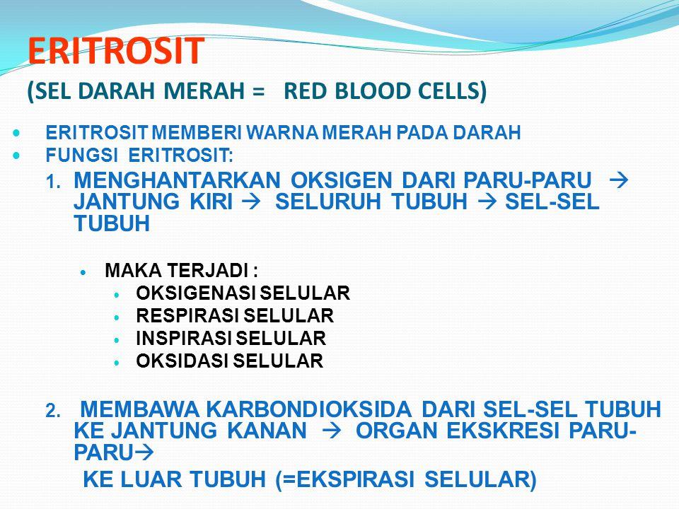 ERITROSIT (SEL DARAH MERAH = RED BLOOD CELLS) ERITROSIT MEMBERI WARNA MERAH PADA DARAH FUNGSI ERITROSIT: 1.
