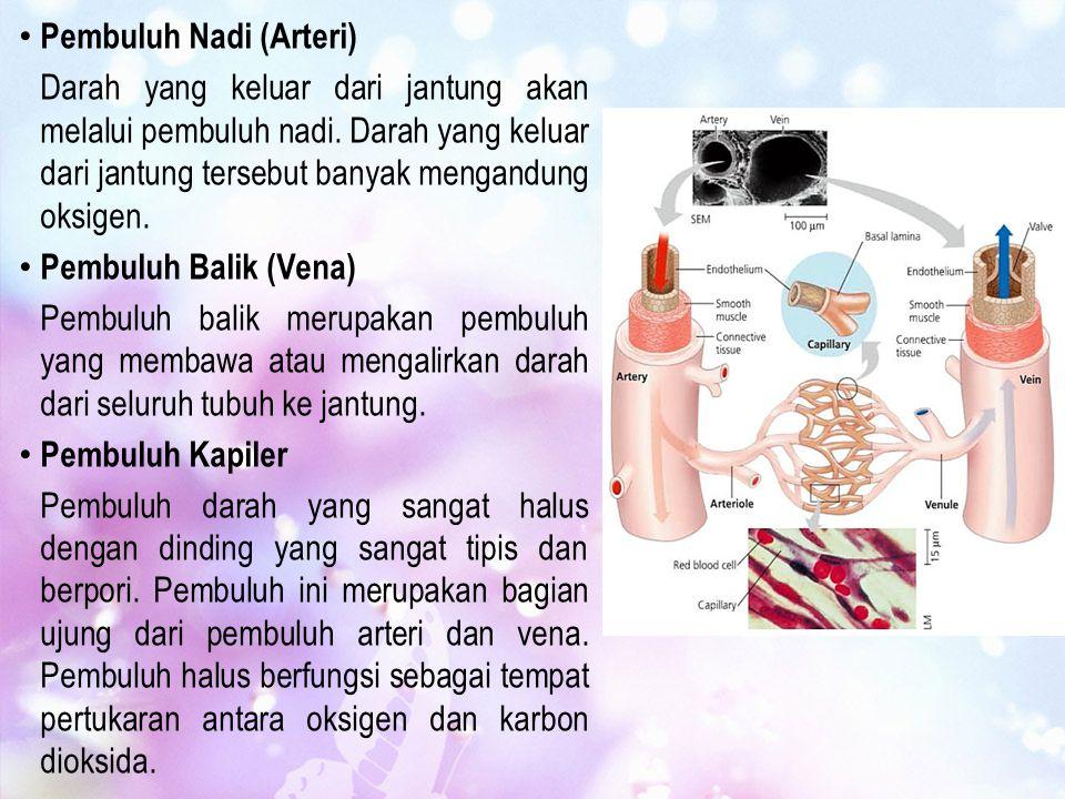 Pembuluh Nadi (Arteri) Darah yang keluar dari jantung akan melalui pembuluh nadi. Darah yang keluar dari jantung tersebut banyak mengandung oksigen. P