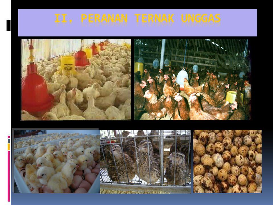 A.HEWAN PERCOBAAN (Laboratory Animals)  Ayam dan Puyuh : Percobaan pemberian pakan (feeeding exsperiment)  Tumbuh baik dalam cages ; konsumsi pakan dan air minum mudah dikontrol  Mudah ditangani, diamati dan ditimbang  Dapat dipelihara dalam jumlah besar pada tempat terbatas  Sangat sensitif terhadap perubahan dan defisiensi zat makanan  Telur dan Embryo : media untuk virus dan vaksin (Virus and Vaccine Culture) B.HEWAN PERCOBAAN (Laboratory Animals)  Unggas, terutama ayam berkembang diseluruh dunia  Murah dan ekonomis untuk diusahakan  Siklus produksi singkat ; 5 minggu (broiler) dapat dipasarkan sebagai sumber daging; dan 5 bulan (layer) sudah menghasilkan telur  Pangan sumber protein  Produk variatif PERANAN UNGGAS :