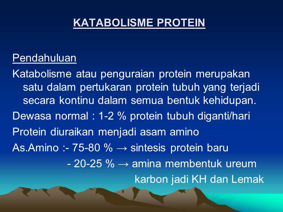 Kecepatan penguraian protein tergantung pada : Respon terhadap kebutuhan fisiologik Usia/waktu paruh protein Enzim pemecah protein : -Protease intrasel -Peptidase -Aminopeptidase dan karboksipeptidase Pada Lisosom : Protein ekstrasel, pada membran dan protein intrasel usia panjang, tanpa ATP