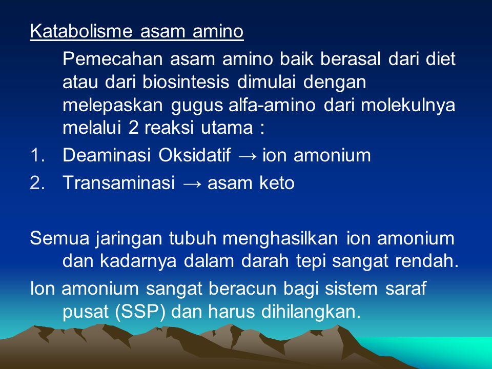 Otak mengubah amonium menjadi glutamin.