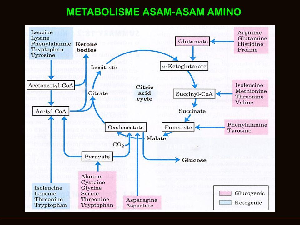 Hubungan Jalur Siklus Urea – Krebs Cycle