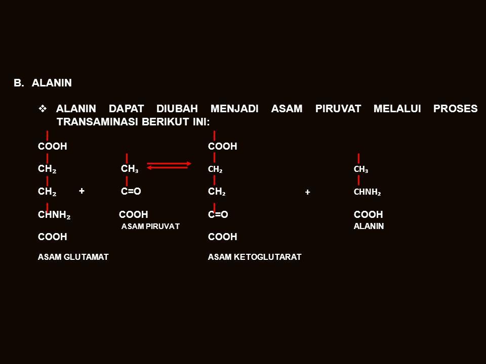 B.ALANIN  ALANIN DAPAT DIUBAH MENJADI ASAM PIRUVAT MELALUI PROSES TRANSAMINASI BERIKUT INI:COOH CH ₂ CH ₃CH₂CH₃ CH ₂ + C=O CH ₂+CHNH₂ CHNH ₂ COOHC=OCOOH ASAM PIRUVAT ALANINCOOH ASAM GLUTAMATASAM KETOGLUTARAT