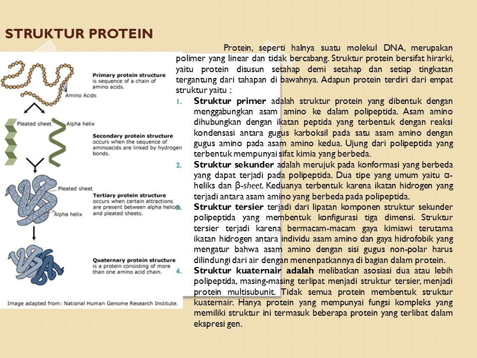 Protein, seperti halnya suatu molekul DNA, merupakan polimer yang linear dan tidak bercabang.