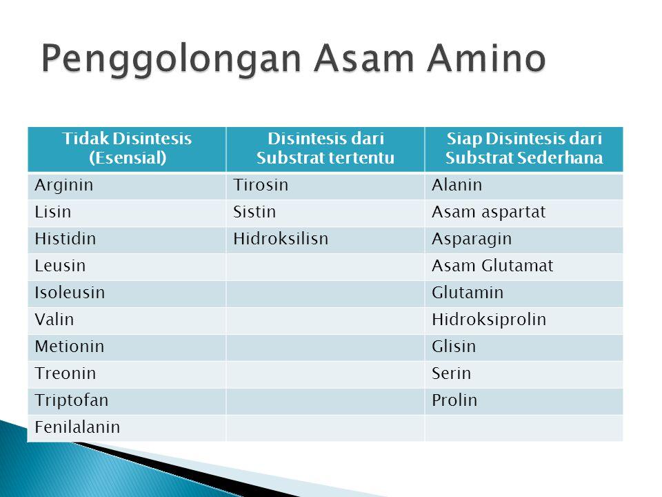Tidak Disintesis (Esensial) Disintesis dari Substrat tertentu Siap Disintesis dari Substrat Sederhana ArgininTirosinAlanin LisinSistinAsam aspartat Hi