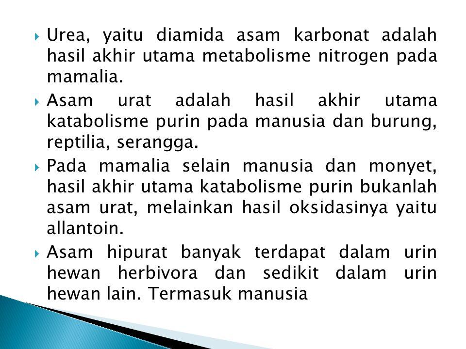  Urea, yaitu diamida asam karbonat adalah hasil akhir utama metabolisme nitrogen pada mamalia.  Asam urat adalah hasil akhir utama katabolisme purin