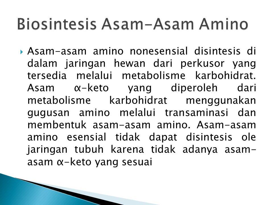  Asam-asam amino nonesensial disintesis di dalam jaringan hewan dari perkusor yang tersedia melalui metabolisme karbohidrat. Asam α-keto yang diperol