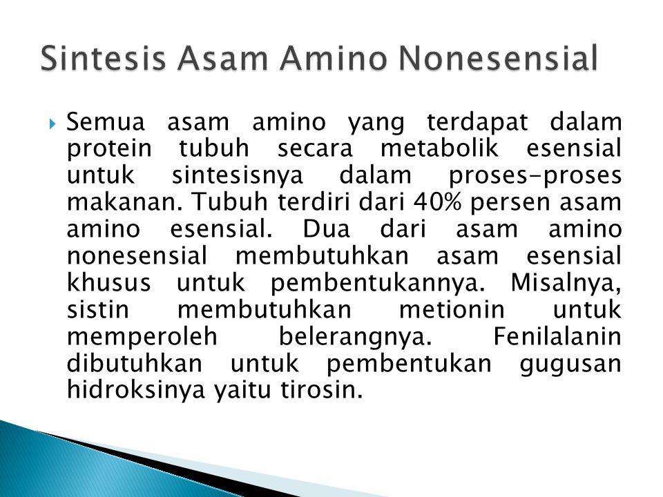  Semua asam amino yang terdapat dalam protein tubuh secara metabolik esensial untuk sintesisnya dalam proses-proses makanan. Tubuh terdiri dari 40% p