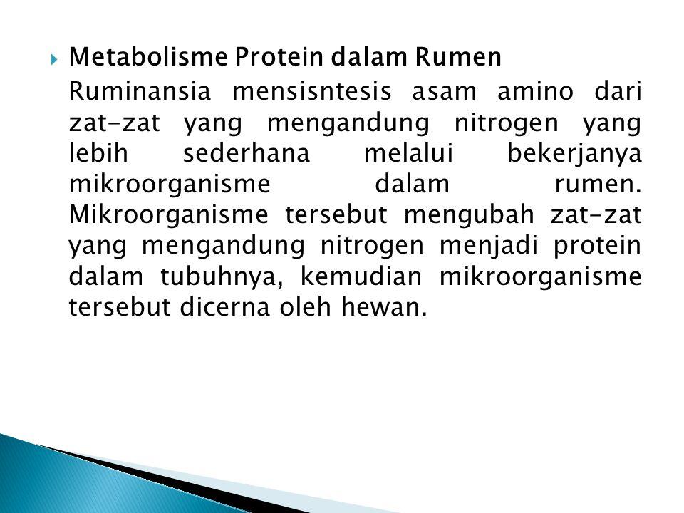  Metabolisme Protein dalam Rumen Ruminansia mensisntesis asam amino dari zat-zat yang mengandung nitrogen yang lebih sederhana melalui bekerjanya mik