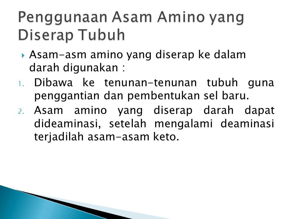  Asam-asm amino yang diserap ke dalam darah digunakan : 1. Dibawa ke tenunan-tenunan tubuh guna penggantian dan pembentukan sel baru. 2. Asam amino y