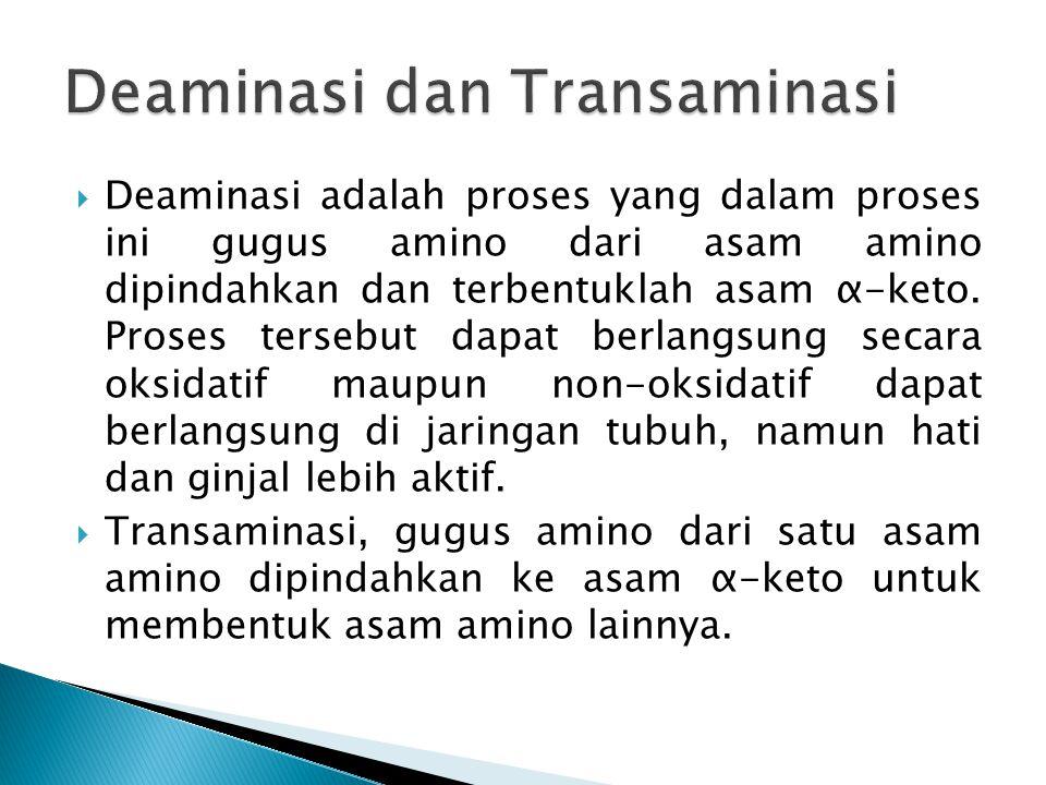  Deaminasi adalah proses yang dalam proses ini gugus amino dari asam amino dipindahkan dan terbentuklah asam α-keto. Proses tersebut dapat berlangsun