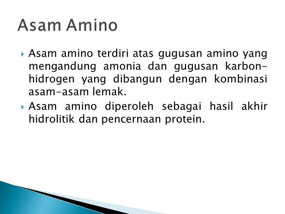  Asam amino terdiri atas gugusan amino yang mengandung amonia dan gugusan karbon- hidrogen yang dibangun dengan kombinasi asam-asam lemak.  Asam ami